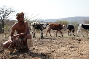 nguni cowhide, cowhides, nguni cattle, South Africa, Zulu, Zulu herdsman, sustainable cowhide, ethical